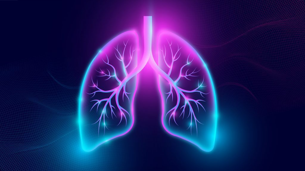 Representation of human lungs.