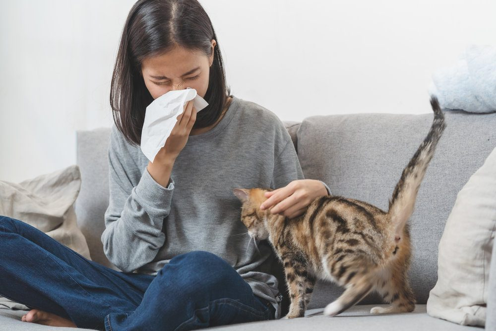 Asian woman on couch sneezing as she pets her cat.